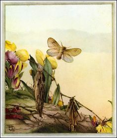 E. J. Detmold ~ Fabre's Book of Insects ~ 1921