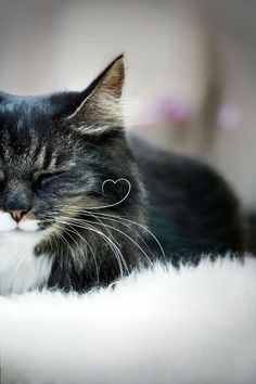 Heart shaped whisker