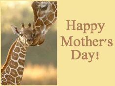 Giraffe Happy Mother's Day mothers day mothers day pictures mothers day quotes happy mothers day quotes mothers day images Happy Mothers Day Pictures, Happy Mother Day Quotes, Mother Quotes, Happy Quotes, Baby Giraffe Tattoo, Giraffe Tattoos, Creatures, Giraffes, Gifs