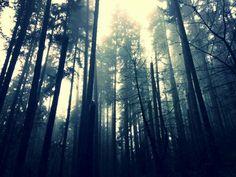 Erie walk through the woods i had last week