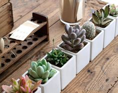 succulent plants and pots - eclectic - landscape - seattle - Le jardinet Colorful Succulents, Succulents In Containers, Planting Succulents, Garden Plants, Indoor Plants, House Plants, Planting Flowers, Container Flowers, Container Plants