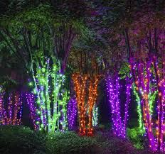 Image result for tree light string animation