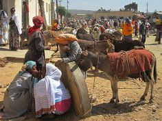 Beasts of burden at the market in Dekemhare, Eritrea.