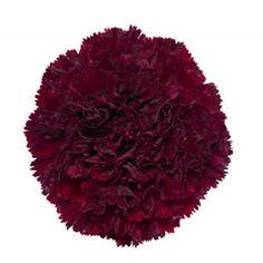 Red velvet carnations