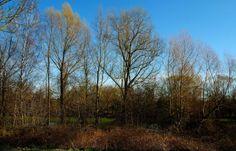 Heute gibt es noch mal einen regenlosen Tag im Saarland. ... Und hurtig ist auch das Braune grün. Nicht nur bei Körprich/ Piesbach.  :-)  http://de.wikipedia.org/wiki/K%C3%B6rprich