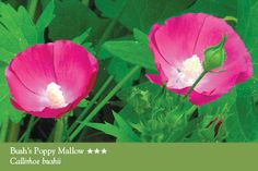 Missouri Wildflowers Nursery In Just South Of Jefferson City