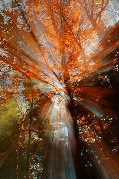 ☀Dreamy Autumn Morning by James Sherwood  Draws me into communion with God.
