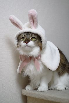 Easter Kitty!! :)) <3