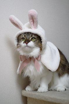 Easter Kitty!! :)) <3