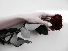 rose, flowers, and red image Half Elf, Yennefer Of Vengerberg, Isabelle Lightwood, Red Aesthetic, Belle Aesthetic, Crown Aesthetic, Queen Aesthetic, Zooey Deschanel, Jolie Photo