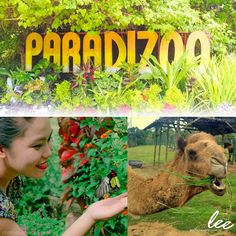 Enjoy Tagaytay with your kids! Bring them to Paradizoo where you can both relax, explore, and learn! #LeeBoutiqueHotel