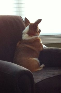 Corgi Security System -- runs on treats!