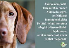 A kutya nemesebb lény mint az ember. A kutya hűséges, önfeláldozó és mindenek…