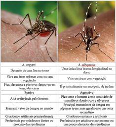 Invivo ::: Veja o vivo ::: Diferenças entre A. aegypti e A. albopictus