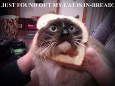 JUST FOUND OUT MY CAT IS IN-BREAD!