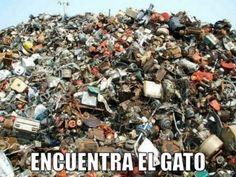 miaucoles_encuentra_el_gato_5