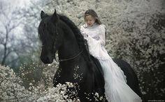 black beautiful horse