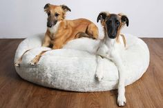 Edler Bezug für Hundebett Flocke ohne Nähmaschine [DIY] [Werbung]   GoldenMerlo Hundeblog Throw Pillows, Dogs, Animals, Scrabble, Small Puppies, Dog Things, Cuddling, Advertising, Sustainability