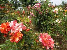 Fotografie - Google Foto Photo And Video, Google, Plants, Plant, Planets