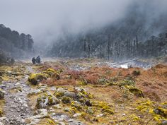 Kangchendzonga National Park, Sikkim. Explore Eastern India with us! http://www.kennethphotography.com/india