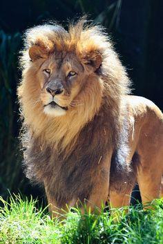 El Rey ❤