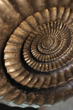 Spirals are a beautiful shape. They have marvelous curves and convey energy and motion. Not only that, they are a truly efficient form used in nature, and we see them so many places in our every day lives!