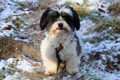 Hunde Foto: Silvia und Buddy - Der kleine Prinz Hier Dein Bild hochladen: http://ichliebehunde.com/hund-des-tages  #hund #hunde #hundebild #hundebilder #dog #dogs #dogfun  #dogpic #dogpictures