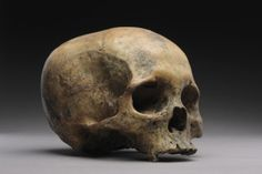 Prehistoric Thick Walled Hominoid Skull of an Early Neanderthal (100th to 51st millennium BC Africa)
