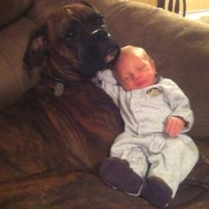 Baby and Boxer...so sweet