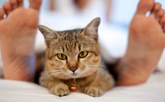 5+Reasons+You+Should+Never+Share+Your+Bed+With+Your+Cat