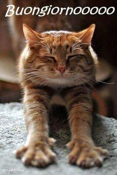 Orange tabby cat: Aaahh - what a good stretch. Pretty Cats, Beautiful Cats, Cute Cats And Kittens, Cool Cats, Chats Tabby Oranges, Gato Animal, Orange Tabby Cats, Cat Boarding, Cat Photography