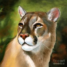 b01d863a6b25 Related image. Valerie Tranq · mountain lion