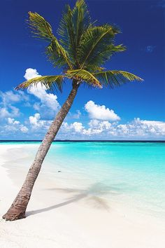 Tropical Beaches With Palm Trees Beautiful Places To Travel, Beautiful Beaches, Beach Pictures, Nature Pictures, Dream Vacations, Vacation Spots, Maldives Beach, Maldives Honeymoon, Beach Wallpaper