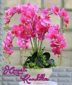100 Pcs orchid seeds rare Phalaenopsis Orchid Flower seeds for home garden plants Balcony Plants, Home Garden Plants, House Plants, Orchid Seeds, Flower Seeds, Flower Pots, Phalaenopsis Orchid, Orchid Plants, Orchids