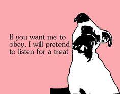 "Boxer ""listening"" for treat"