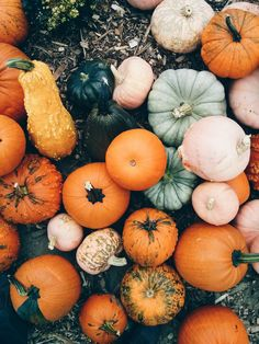 "octoberglory: ""  Pumpkinin' by Branden Etheridge Via Flickr: Processed with VSCOcam with hb1 preset """