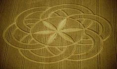 UFOPOLIS: La flor de la vida en los círculos del maiz