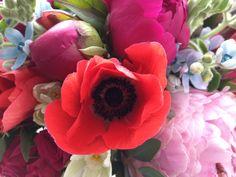 anemone bloom