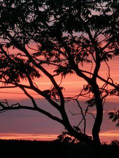 Celestial, Sunset, Outdoor, Sunsets, Outdoors, Outdoor Living, Garden