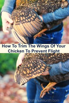 How To Clip Chicken Wings, Chicken Keeping, How to Care for Chickens, Chicken Wings Chicken Garden, Chicken Life, Backyard Chicken Coops, Chicken Coop Plans, Building A Chicken Coop, Chicken Runs, Diy Chicken Coop, Chicken Ideas, Raising Backyard Chickens