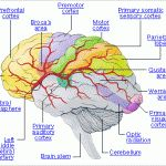 What are the top 10 biggest brain damaging habits?