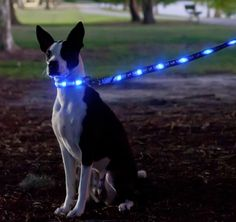Dog-E-Glow – An LED Leash To Keep Your Dog Safe And Visible At Night | DROOL'D