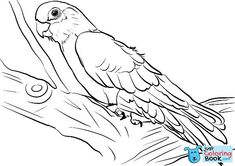 Free Printable Galah Cockatoo Coloring Pages and others free printable coloring pages for kids and adults! Just free for you! Flamingo Coloring Page, Owl Coloring Pages, Free Printable Coloring Pages, Free Coloring, Coloring Books, Bird Drawings, Animal Drawings, Printable Crafts, Free Printables