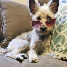 Here's to you good lookin #TBT to #NationalDogDay watch out #Hollywood @maci_gracie coming at you in #MarilynEyewear Annabel #sunglasses  #fashion #style #marilynmonroe #doggylove #glamorous #photooftheday #modelshot
