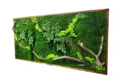 "Amazing!   40"" x 18"" LARGE Plant Painting- No Care Green Wall Art. Real Preserved Plants in Reclaimed Wood Frame & Red Barked Branches."