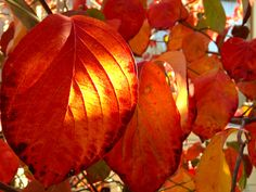 A little fall leaf color in California. Etsy Shop SmartBlondes Handmade@Amazon/Smart Blondes