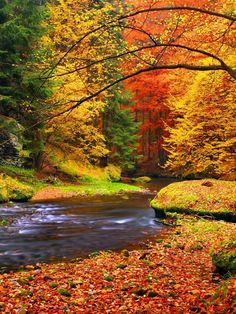 Forests Art from $59.99 | www.wallartprints.com.au #AutumnPictures