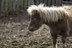 A Shetland Pony broke into a UK bar and finished off a couple of drinks. Modern Farmer, Getting Drunk, Bar Drinks, Farm Animals, Animals Beautiful, Goats, Pony, Horses, Party Time