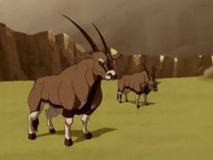 Avatar Legend Of Aang, Avatar Aang, Legend Of Korra, Avatar Animals, Avatar Characters, Animal Species, Character Art, Character Ideas, Avatar The Last Airbender