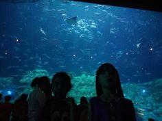 Ocean Park, Hong Kong, Aquarium, Fish Stand, Fish Tank, Aquarius